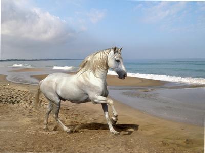 https://imgc.artprintimages.com/img/print/dream-horses-012_u-l-q12tnl00.jpg?p=0