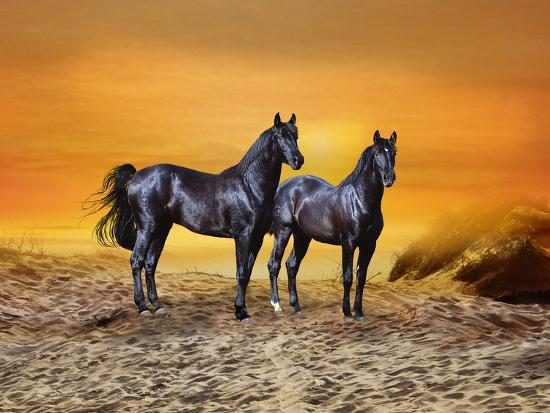 Dream Horses 016-Bob Langrish-Photographic Print