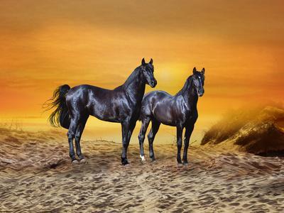 https://imgc.artprintimages.com/img/print/dream-horses-016_u-l-q12tnn50.jpg?p=0