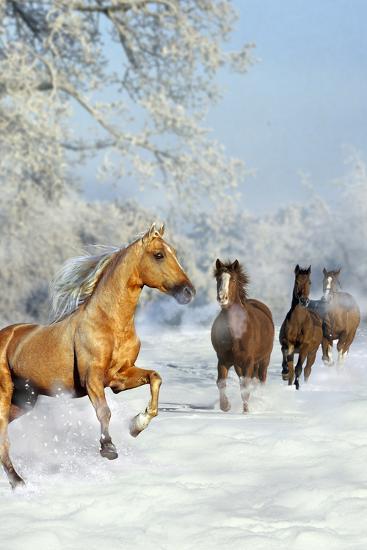 Dream Horses 017-Bob Langrish-Photographic Print