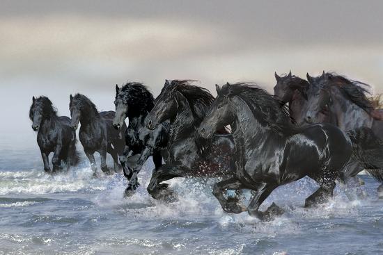 Dream Horses 019-Bob Langrish-Photographic Print