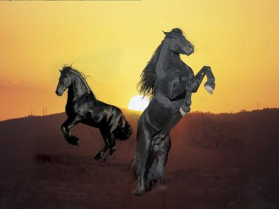 Dream Horses 024-Bob Langrish-Photographic Print