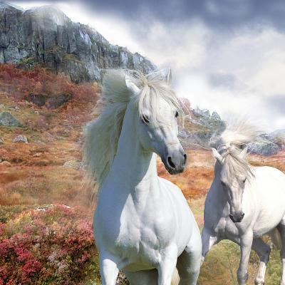 Dream Horses 031-Bob Langrish-Photographic Print
