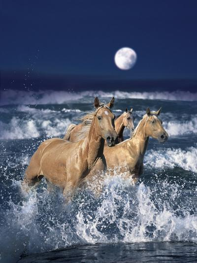 Dream Horses 036-Bob Langrish-Photographic Print