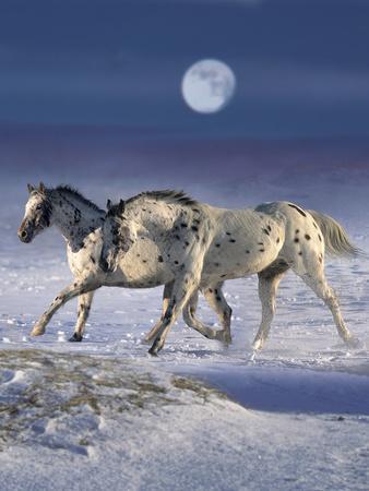 https://imgc.artprintimages.com/img/print/dream-horses-055_u-l-q12tyz20.jpg?p=0