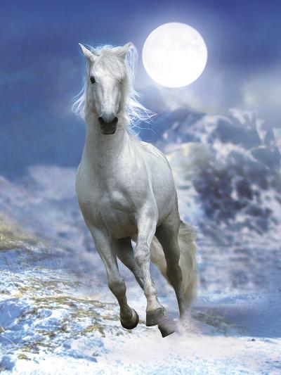 Dream Horses 060-Bob Langrish-Photographic Print
