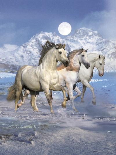 Dream Horses 061-Bob Langrish-Photographic Print