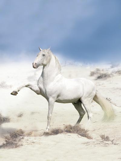 Dream Horses 063-Bob Langrish-Photographic Print