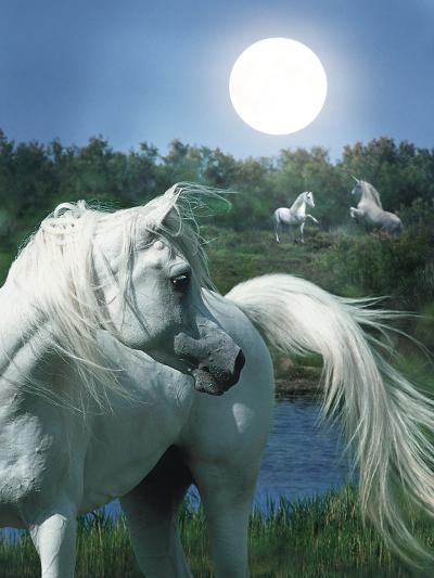 Dream Horses 066-Bob Langrish-Photographic Print