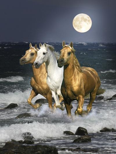Dream Horses 068-Bob Langrish-Photographic Print