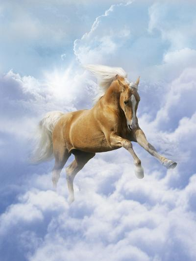 Dream Horses 069-Bob Langrish-Photographic Print