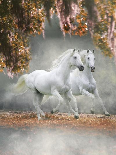 Dream Horses 072-Bob Langrish-Photographic Print