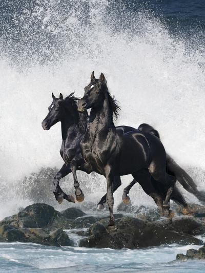 Dream Horses 073-Bob Langrish-Photographic Print