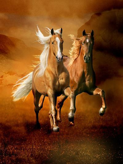 Dream Horses 075-Bob Langrish-Photographic Print
