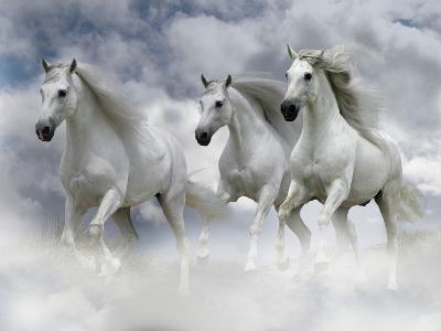Dream Horses 087-Bob Langrish-Premium Photographic Print