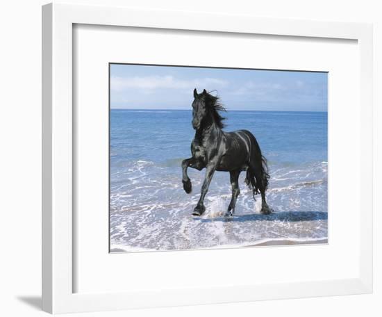 Dream Horses 095-Bob Langrish-Framed Photographic Print