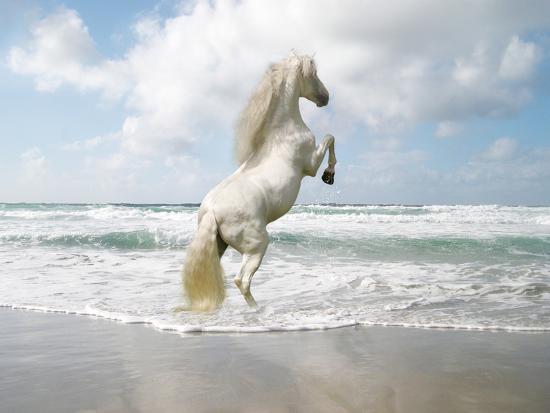 Dream Horses 096-Bob Langrish-Photographic Print