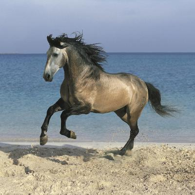 Dream Horses 102-Bob Langrish-Photographic Print