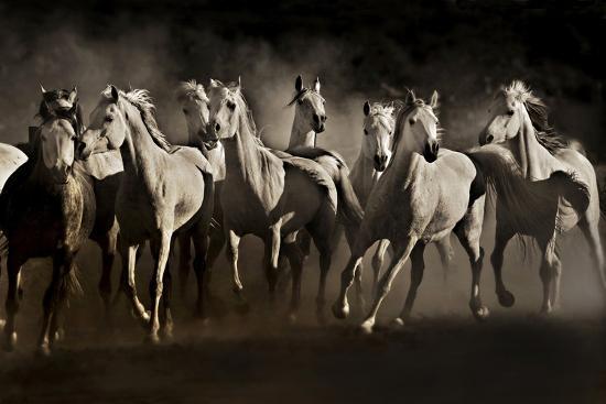 Dream Horses-Lisa Dearing-Photographic Print