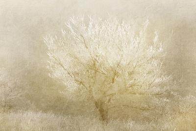https://imgc.artprintimages.com/img/print/dreaming-tree_u-l-q1bbz6b0.jpg?p=0