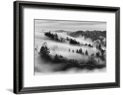 Dreamland, Black and White, Fog at Mount Tamalpais, Marin, Bay Area San Francisco-Vincent James-Framed Photographic Print