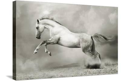 Dreamstate Equus--Stretched Canvas Print