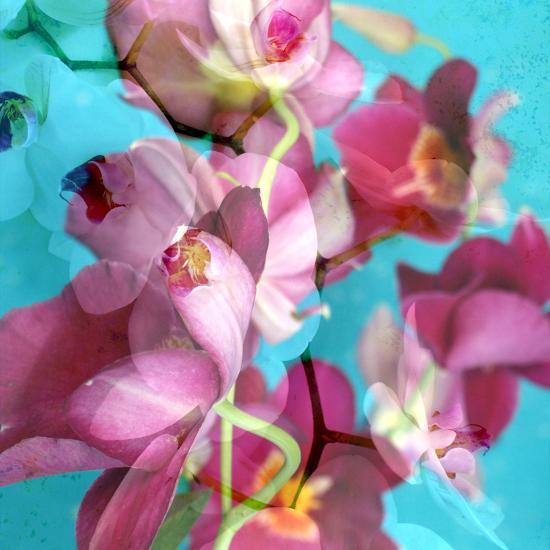 Dreamy Pink Blooming Miltonia Orchid and Phaleaonopsis Infront of Light Blue Backgound-Alaya Gadeh-Photographic Print