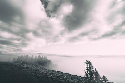 Dreamy Walk, Black and White, Hayden Valley, Yellowstone National Park-Vincent James-Photographic Print