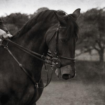 Dressage - The Collection-Pete Kelly-Giclee Print