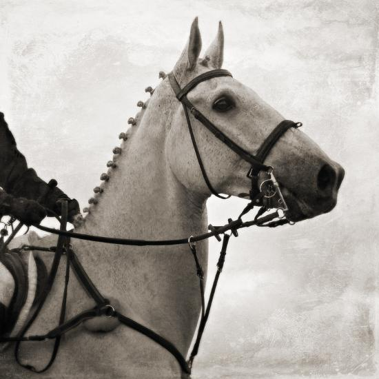 Dressage - The Counter-Pete Kelly-Giclee Print
