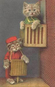 Dressed Kittens, Organ Grinder