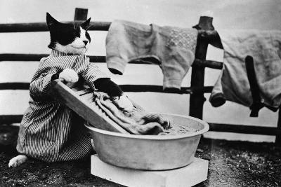Dressed Up Cat Washing Clothes in Wash Tub--Photographic Print