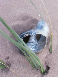 Dried and Empty Snail Shell on Sand and Grass