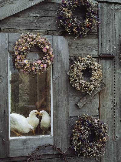 Dried Flower Wreaths Adorn a Wooden Wall Near a Window with Doves-Bill Curtsinger-Photographic Print