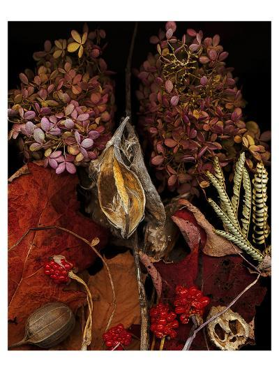 Dried Leaves hydrangea--Art Print
