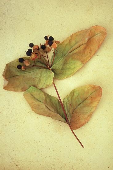 Dried Plant-Den Reader-Premium Photographic Print