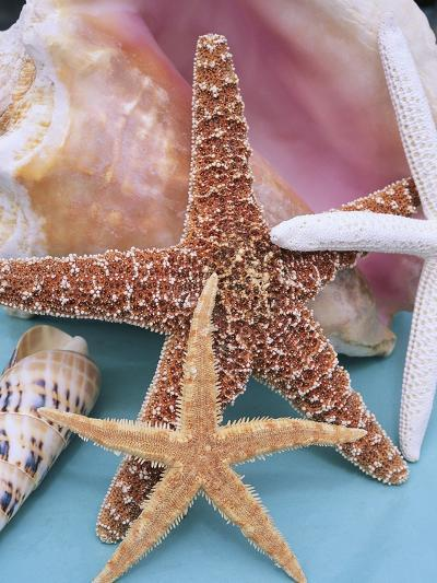 Dried Sea Stars Leaning on Shell-Robert Marien-Photographic Print