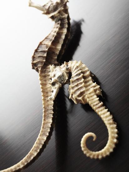 Dried Seahorses-Ken Seet-Photographic Print