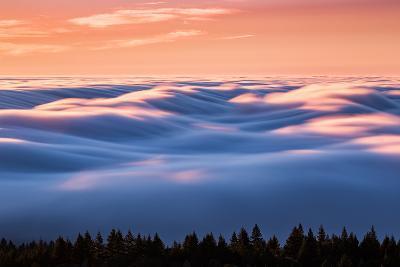 Drifting Above The Fog, Mount Tamalpais, San Francisco-Vincent James-Photographic Print