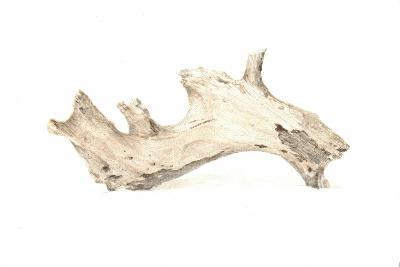 Driftwood, 2015-Lincoln Seligman-Giclee Print