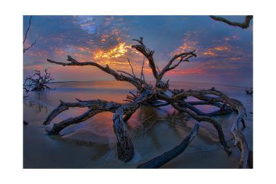 Driftwood and Sunset-Lantern Press-Art Print