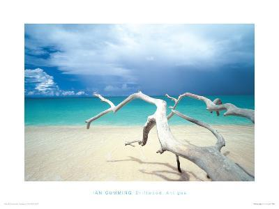 Driftwood, Antigua-Ian Cumming-Giclee Print