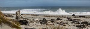 Driftwood on Ship Creek Park beach, Haast, Westland District, West Coast, South Island, New Zealand