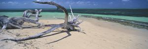 Driftwood on the Beach, Green Island, Great Barrier Reef, Queensland, Australia