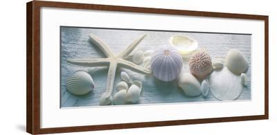 Driftwood Shells II-Bill Philip-Framed Art Print