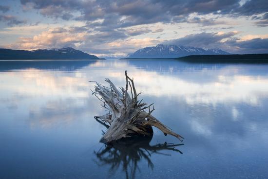 Driftwood Stump in Naknek Lake Katmai National Park Southwest Alaska Summer-Design Pics Inc-Photographic Print