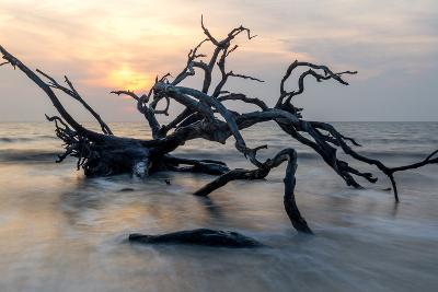 Driftwood Sunrise-pkphotography-Photographic Print