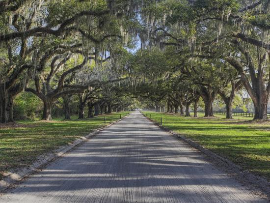 Driveway Beneath Stately Live Oak Trees Draped in Spanish Moss, Boone Hall Plantation-Adam Jones-Photographic Print