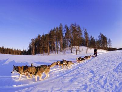 Driving a Dogsled with a Team of 8 Siberian Huskies, Karelia, Finland, Europe-Louise Murray-Photographic Print
