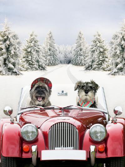 Driving Car Through a Snow Scene--Photographic Print